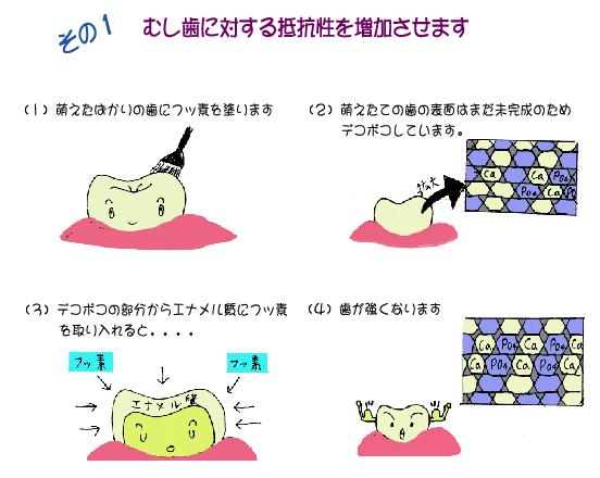 虫歯に対する抵抗性を増加させます